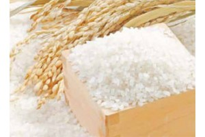 Оризът – насъщен на италианците